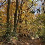 saint-point-automne1.jpg