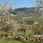 saint-point-printemps1.jpg